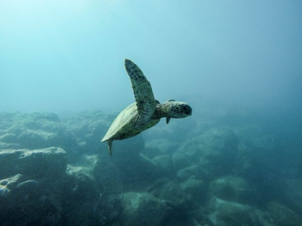 How Does Plastic Pollution Affect Marine Life?