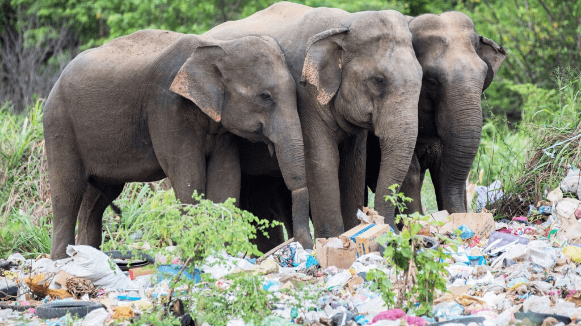 What is the Effect of Plastic in Forests and Wildlife?