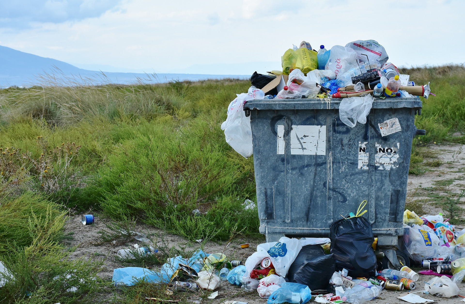 How Does Plastic Affect Wildlife and Forests?