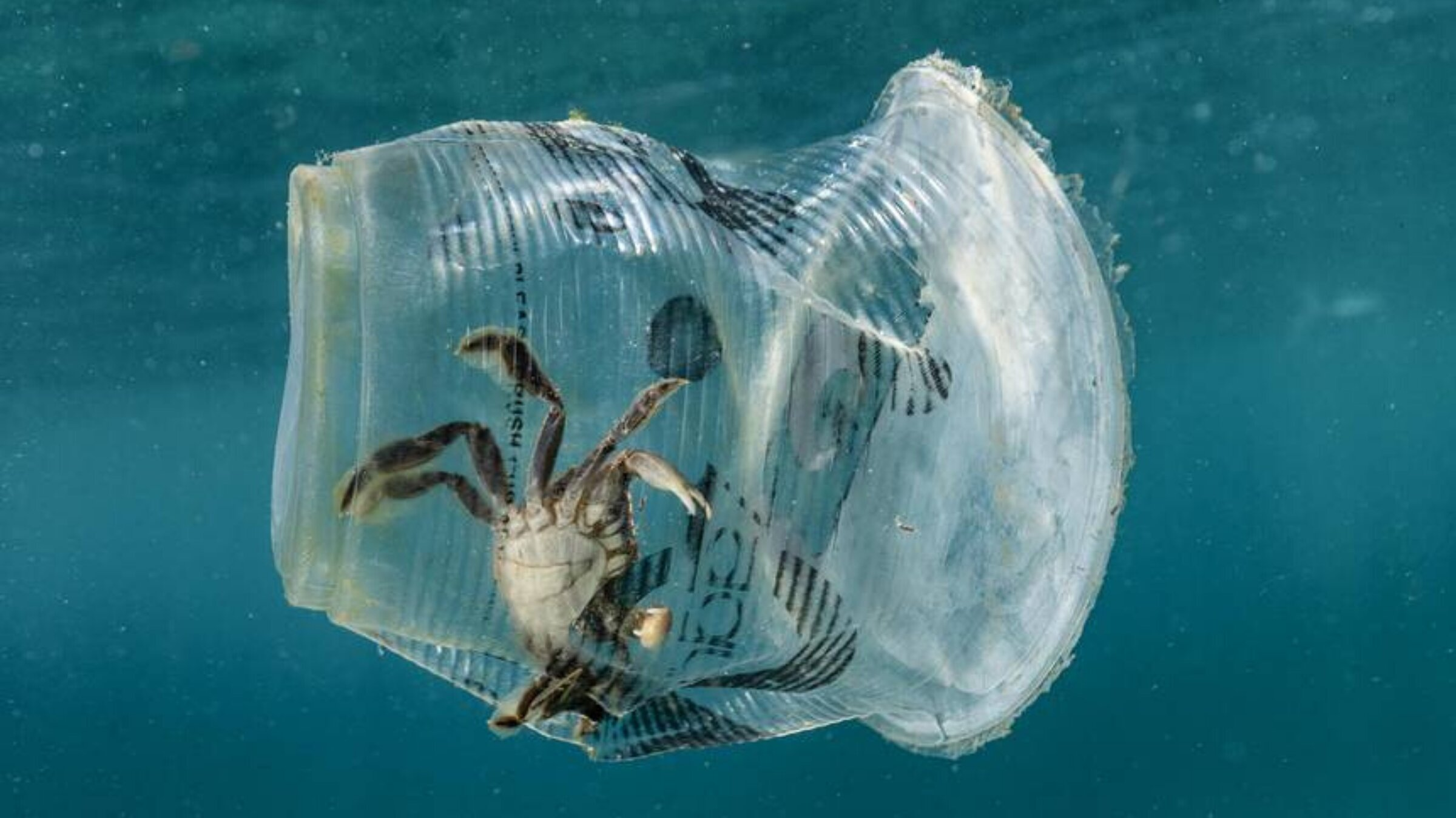 What Is The Effect of Ocean Plastics On Marine Life?