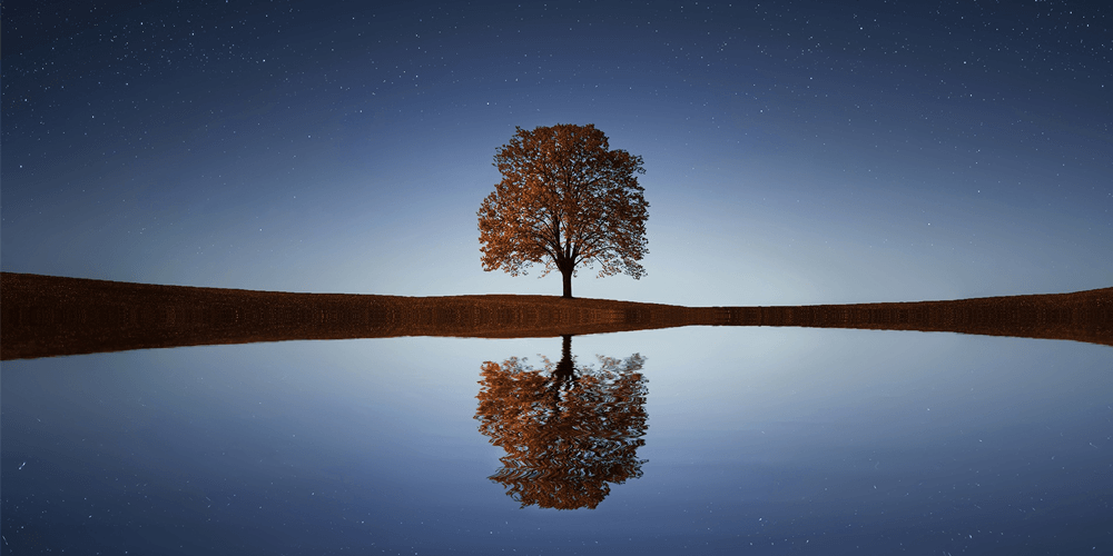 Tree's Reflection in Water and Environment
